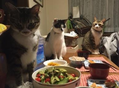 青山めぐの猫中心の暮らしがヤバい?画像2