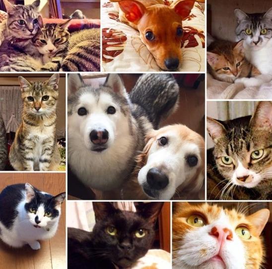 青山めぐの猫中心の暮らしがヤバい?画像3