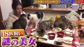 青山めぐは食卓に猫「毛も気にしない」