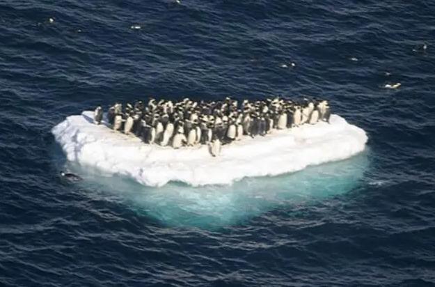 南極で初の20度超え!氷が解けたらどうなるか?