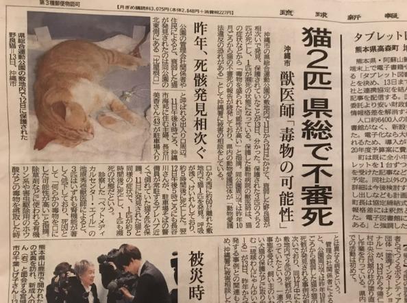 沖縄県豊見城市で猫の不審死!周辺での類似事件は?