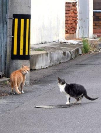 沖縄県石垣島でも猫の不審死が相次ぐ