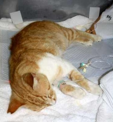 沖縄県豊見城市で猫が不審死を遂げた理由とは?