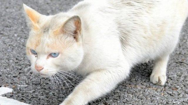 沖縄県豊見城市で猫の不審死が起きた理由や真相は?経緯や周辺の類似事件も調査