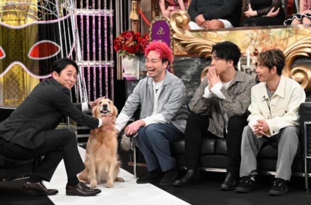 マティ(ソナーポケット)がタレント犬にしたいと溺愛しすぎる愛犬とは?2