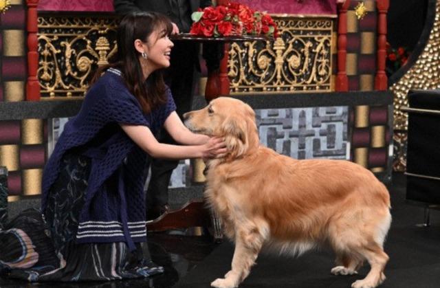 マティ(ソナーポケット)がタレント犬にしたいと溺愛しすぎる愛犬とは?